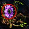 アンテノラ花