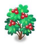 ティンクルベリーの木
