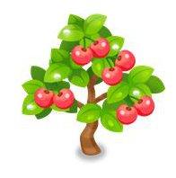 シャインチェリーの木
