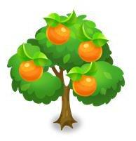 スイートオレンジの木