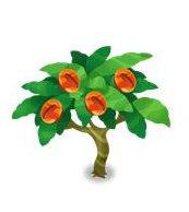 マーブルコーヒーの木