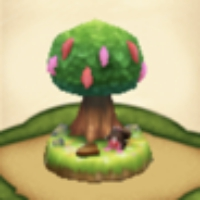 おっきなカカオの木